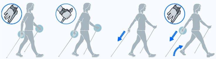 Техника скандинавской ходьбы по элементам