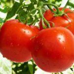 узнай сколько калорий в помидоре свежем