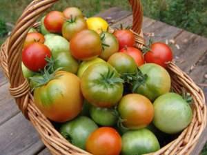 Правила выбора качественных помидоров