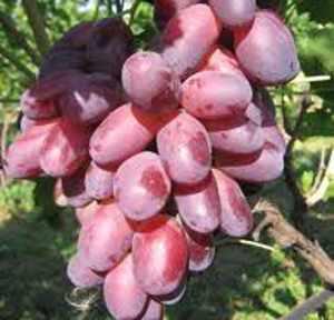 сколько калорий в красном и белом винограде