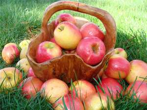 Узнай сколько калорий в яблоке
