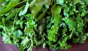Столовая и дикая зелень для очистки организма