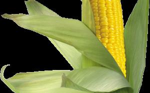 как узнать сколько калорий в кукурузе вареной
