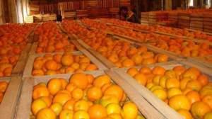 мандарин - полезные свойства и противопоказания