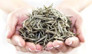 полезные свойства белого чая