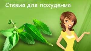 Стевия используется для похудения