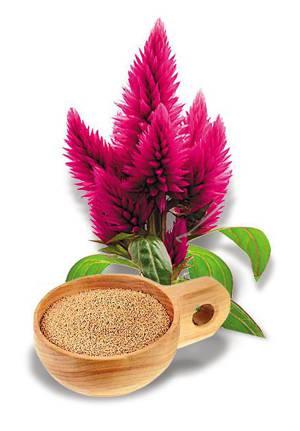 Полезные и лечебные свойства в применении масла амаранта