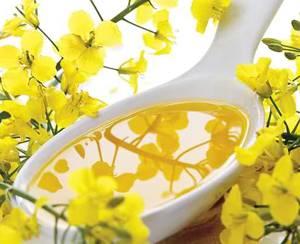 Рапсовое масло: вред и польза для здоровья