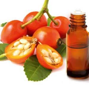 Лечебные свойства и сферы применения масла шиповника