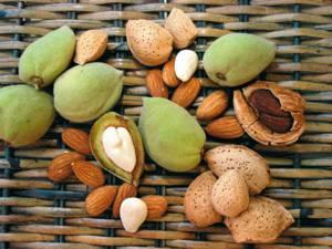 Миндальный орех в народной медицине