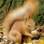 Полезные и лечебные свойства грецких орешков