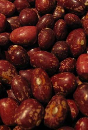 Полезные свойства бобов фасоли