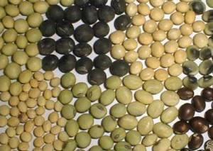 Полезные свойства и противопоказания сои