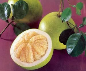 Полезные свойства и противопоказания фрукта помело