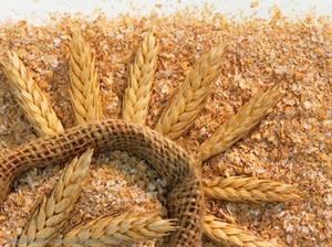 Полезные свойства отрубей пшеницы