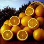 Правда ли, что чем толще кожура апельсина, тем он слаще