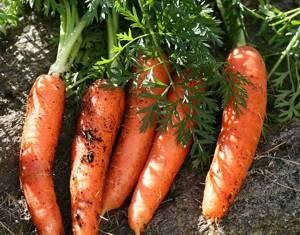 Сколько можно в день морковки