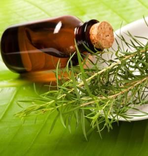 Сферы применения эфирного масла чайного дерева