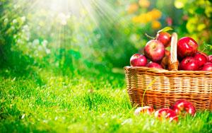 Аскорбиновая кислота в яблоках для похудения