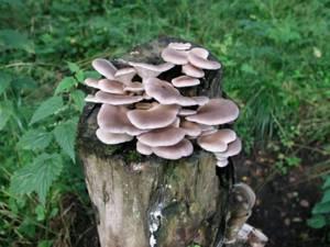Вред и возможные противопоказания грибов
