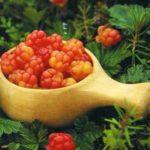 Вред и противопоказания к применению морошки