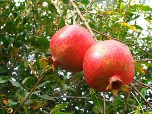 Как правильно выбрать фрукт