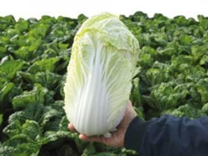 Как правильно хранить овощ