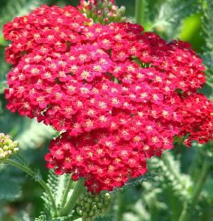 Химический состав растения