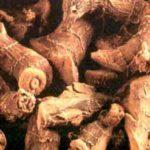 Лечебные свойства корня калгана