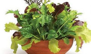 Польза фолиевой кислоты в салатных миксах