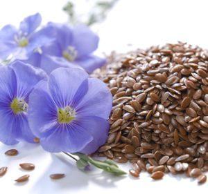 Полезные свойства и возможные противопоказания семян льна