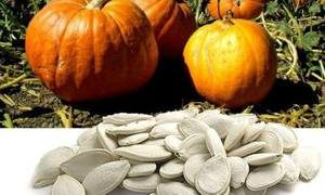 Полезные свойства и химический состав тыквенных семечек