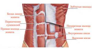 """Какие мышцы укрепляются благодаря упражнению """"Вакуум"""" для плоского живота"""