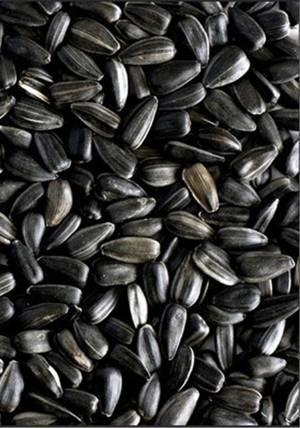 В чем заключается польза и вред семечек подсолнечника