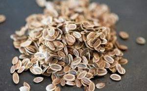 Полезные свойства и возможные противопоказания семян укропа