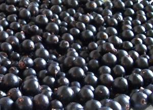 Как правильно хранить ягоды черной смородины