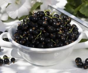 Лечение различных недугов черной смородиной