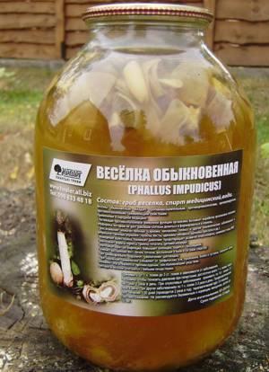 Как приготовить в домашних условиях настойку из гриба веселки