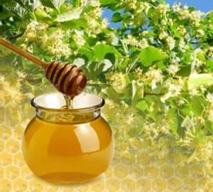 Полезные и лечебные свойства липового меда для организма человека