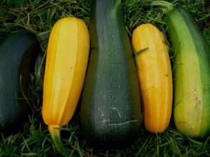 Полезные, лечебные свойства и противопоказания кабачков