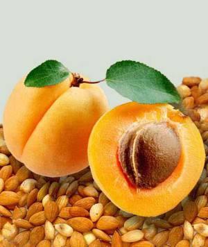 Полезные свойства и противопоказания абрикосовых косточек