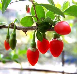 Какие ягоды эффективны или псевдоэффективны при похудении