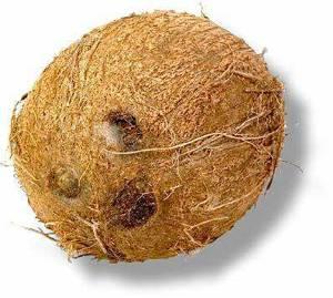 Как правильно вскрыть кокос в домашних условиях