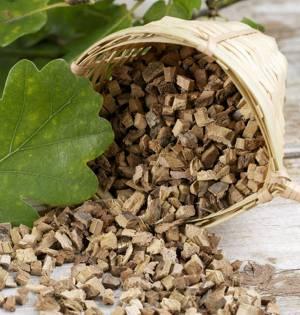 Лечебные свойства и возможные противопоказания коры дуба