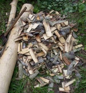 Настойки, экстракты, отвары коры осины и сферы их применения