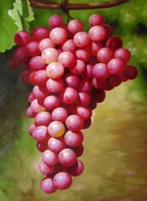 Полезные, лечебные свойства и противопоказания к применению винограда