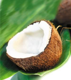 Польза и возможный вред кокоса для организма человека