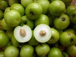 Польза и вред плодов зизифуса (унаби)