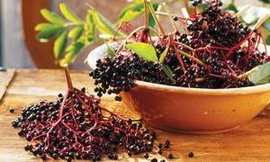 Применение сока, сиропа и плодов черной бузины в кулинарии