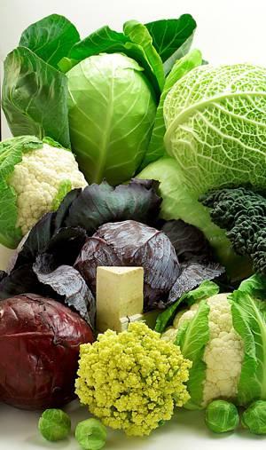 Чем полезны для организма разные виды капусты, их лечебные свойства и противопоказания
